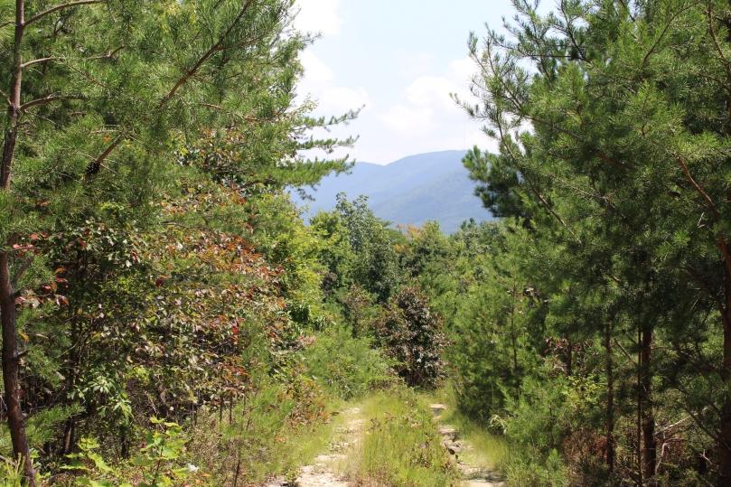Wolfpen Gap 015
